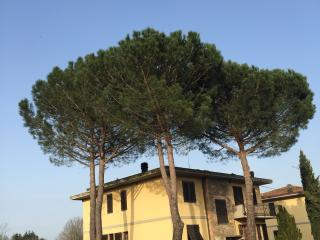 Chianti B&B ' Edoardo' tra Siena firenze e Arezzo, Ambra
