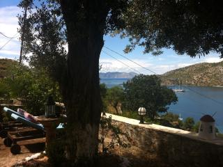 Our 70 year old olive tree with a view towards the Greek island Symi