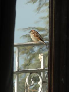 A bird siting on the railing of the balcony as viewed from the dining table