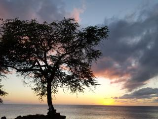Aloha Cottage With A View