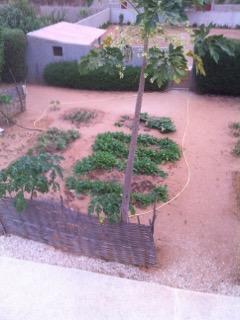 Jardin potager et fruitiers
