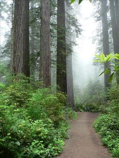 A short drive to hikes in the redwoods