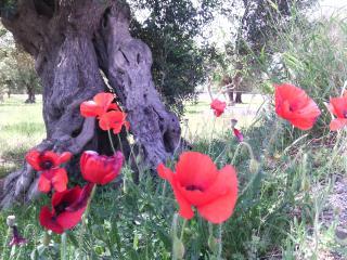 Il Papavero Rosso, Corigliano d'Otranto