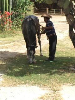 The ranch's beautiful horses are well cared-for and lovingly handled.