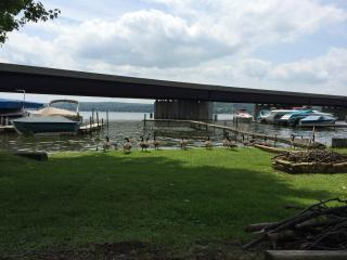 Your private dock (& firepit) out the back door. Pedal boat available for guest use.