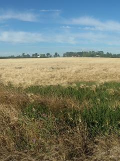 I nostri campi di grano.