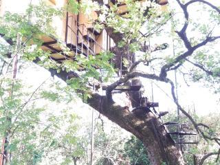 TREE HOUSE, Scario