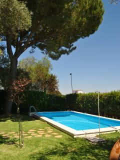 La piscina en verano luce genial bajo el pino piñonero traido de Puerto Real hace 40 años.