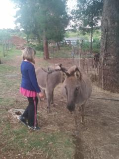 Nearby is natural park Sutivan with local animals (donkey is simbol of Dalmatia)
