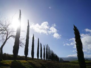 La Tana del Bianconiglio - App. Uva, Gallina