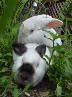 SnowBelle is Cinderella's new partner . They will have a new family may 30