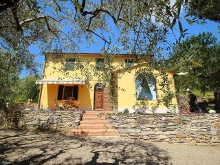 Country house amongst the olive trees, Vicopisano