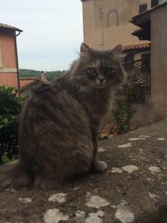 Per le strade di Genzano