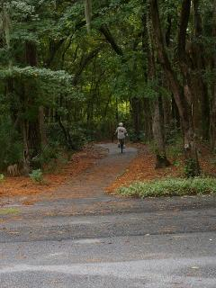 Bike/Walk path to the beach