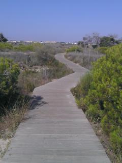 Camino entre dunas para llegar a la playa
