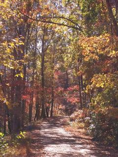 Road from the cabin in fall