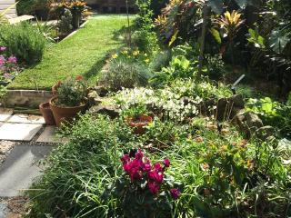 gorgeous sunny garden with lawn and herbs aplenty
