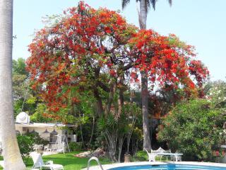 Jolie maison de vacance et de week-end, Xochitepec