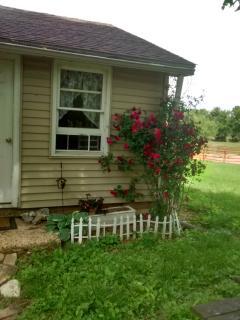 Cottage summer roses.
