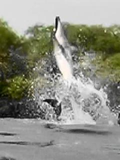 Dolphins rest in our bay.  Watch them swim by and spin in the bay.  PLEASE DON'T HARASS THE DOLPHINS