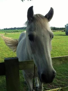 Charlie Pony - one of the residents of the paddocks, and a favourite with our guests!