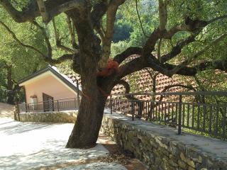 Locazione vacanze Villa Serena, Pisciotta