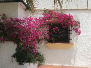Gorgeous bougainvillea outside the bedroom window
