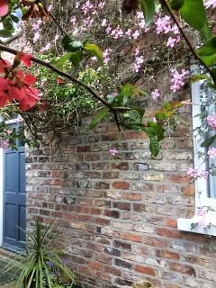 The door to the apartment (with Maytime blossoms!)