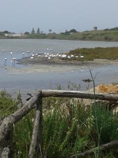 i fenicotteri dietro la villa isola naturalistica ponte rio