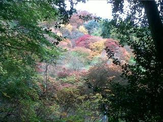 Winkworth Arboretum in the Autumn