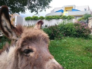 Apartment where cute donkeys are welcoming you!, Smrika