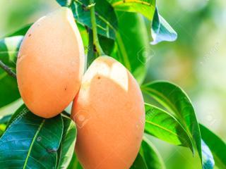 Mango Tree Rest, Anuradhapura