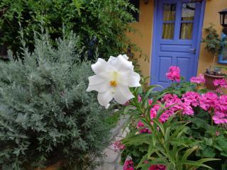 La Casa del Frangipane, Rhodos