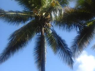 L'Auxilliadora, vacances bien-etre a Ste Anne, 2 plages a 5min a pieds