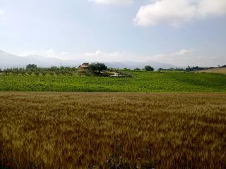 Il Casale dei Ciliegi, Baschi