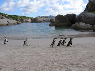 Boulders Beach House -sea, penguins and golf, Simon's Town