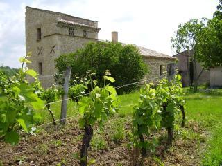 Le pigeonnier au milieu du vignoble du Gaillac, Cahuzac-sur-Vere