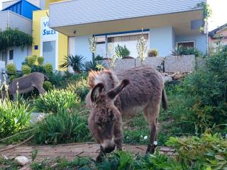 Spacious apartment with sea view and donkeys!, Smrika
