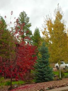 Beautiful Fall Trees.