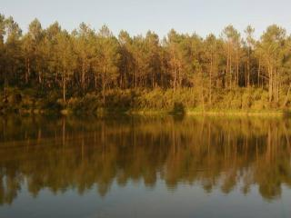 Cuckoo Lake - Forest Fishing and Nature Holidays