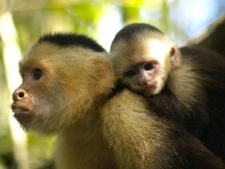 Monkey Hut, Puerto Jimenez, Península de Osa, Puerto Jiménez