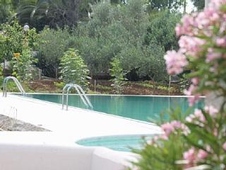 The Olive Grove, Coratina