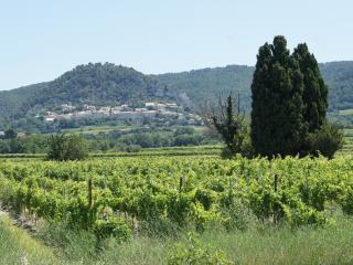 Maison dans les vignes et les oliviers