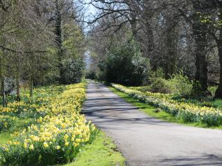 The drive leading to Daffodil Cottage
