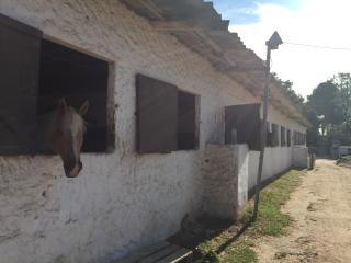 2-storey mas provencal with private garden