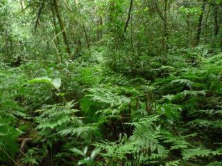 Madrugada Fairy forest