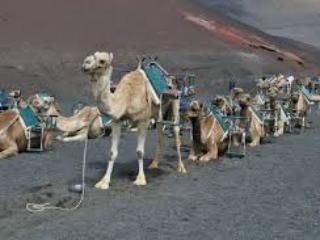 Echadero de los camellos
