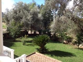 Garden - side view with olive trees.