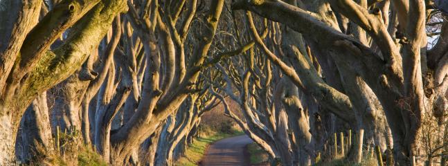 The Dark Hedges - 15 minute drive