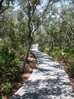 Explore the boardwalks